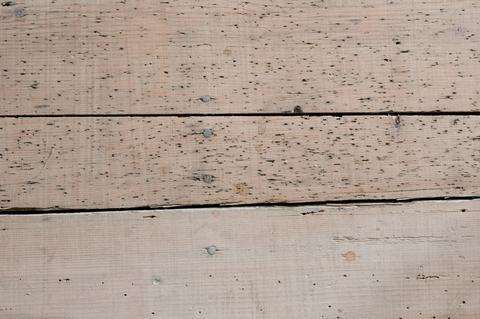 Uitvliegopeningen houtworm